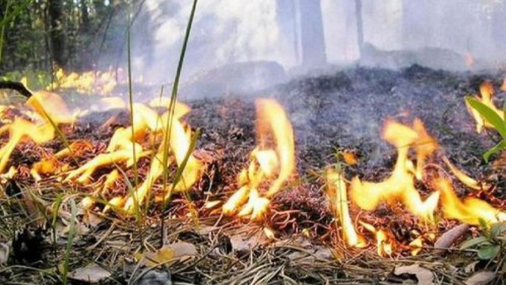 Более 600 нарушений правил пожарной безопасности в лесах Подмосковья выявили в 2020 году