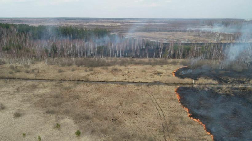 Девять лесных пожаров потушили в Подмосковье за три дня