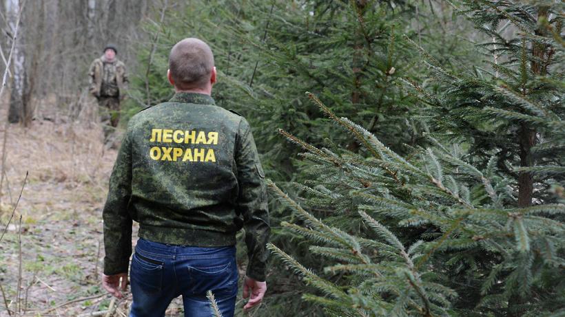 Лесничие Подмосковья будут штрафовать за нарушение режима самоизоляции