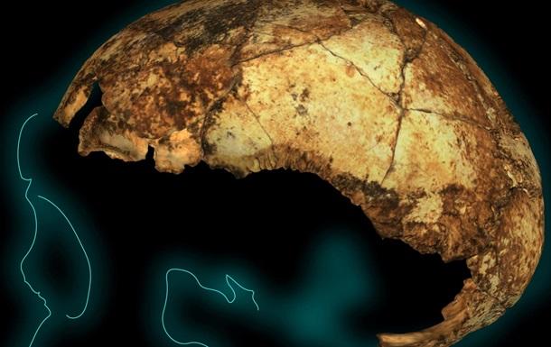 Найден древнейший череп Homo erectus
