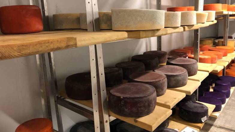 Новая сыроварня в Шаховской сможет производить до 200 тонн сыра в год