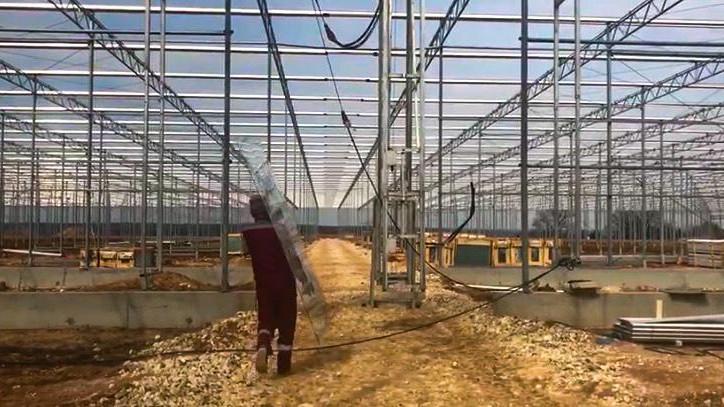 Первую рассаду овощей в новом тепличном комплексе в Серпухове вырастят в середине лета
