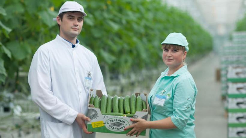 Подмосковная теплицабесплатнопоставила 5,5 тонн овощей пенсионерам Московского региона