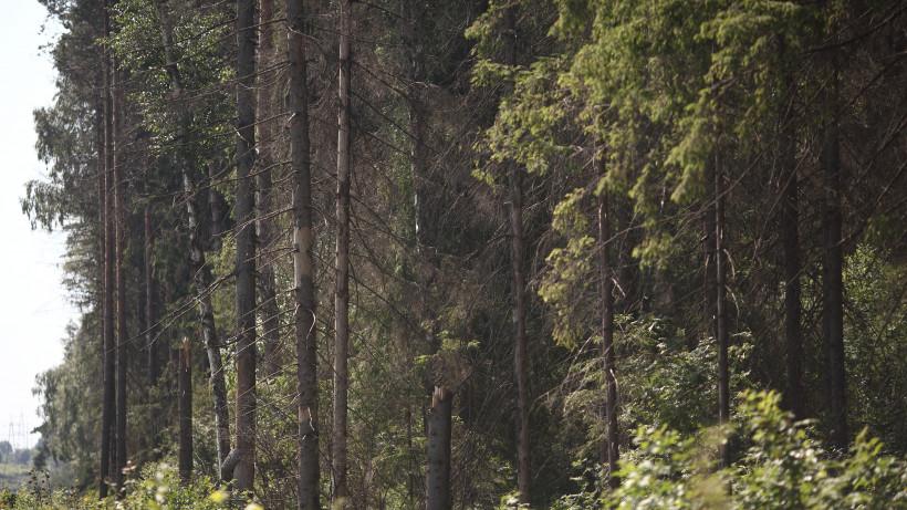 Подмосковные леса продолжают приводить в порядок