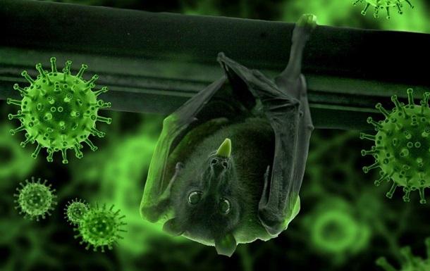 Ученые нашли связь между коронавирусами и летучими мышами
