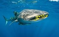 Ученые установили возраст акул благодаря испытанию атомного оружия