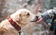 В Британии собак учат вынюхивать коронавирус