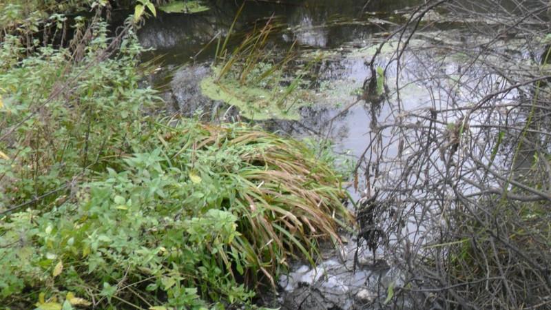 Загрязнителей реки Уча в Мытищах привлекут к административной ответственности