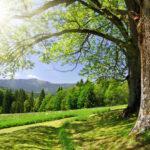 Беседа: «Сохранить природу- сохранить жизнь».