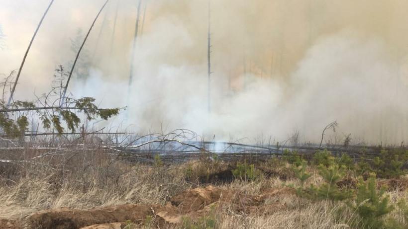 Более 20 лесных пожаров потушили в Подмосковье с начала мая
