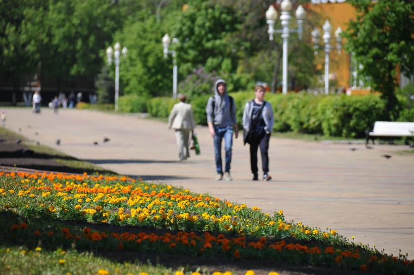 Более 6 млн цветов высадят на улицах Подмосковья в 2020 году