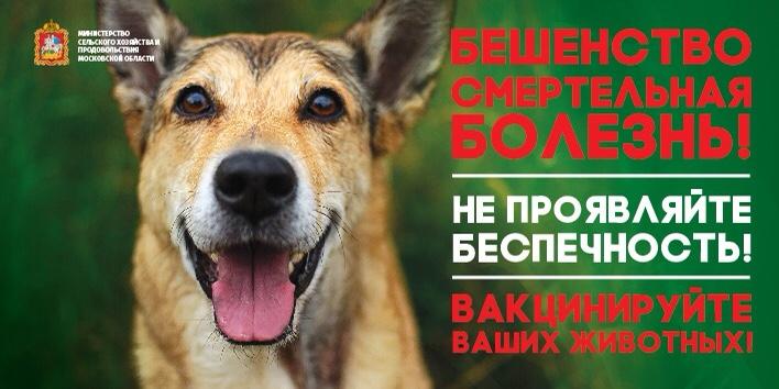 Число неблагополучных по бешенству животных муниципалитетов сократилось в Подмосковье