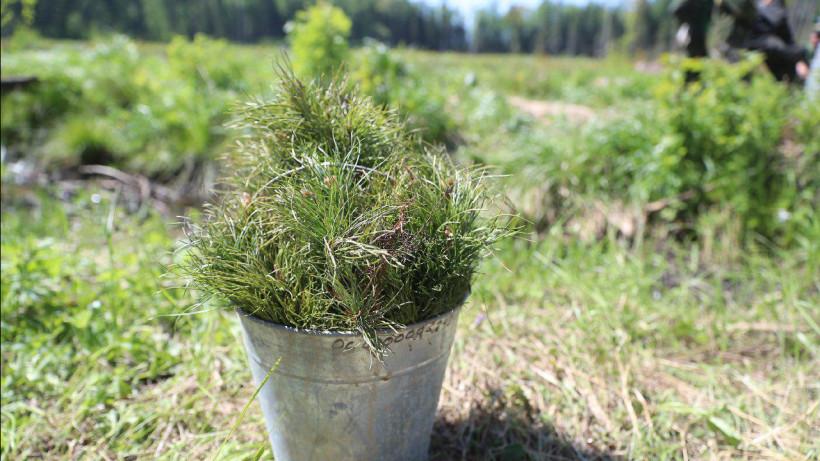 Деревья в рамках акции «Лес Победы» будут высаживать в Подмосковье до 20 мая