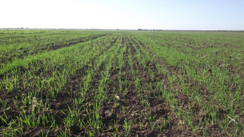 Как начинающим фермерам Подмосковья получить грант на развитие