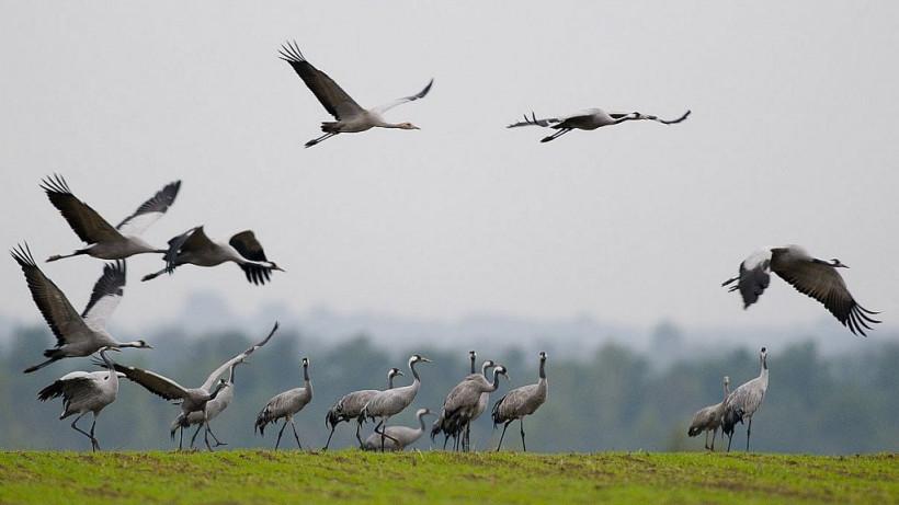 Минэкологии Подмосковья взяло на особый контроль гнездовье аиста в Наро-Фоминском округе