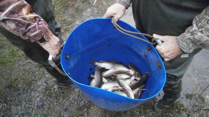 Около 30 тыс. мальков щуки выпустят в Рузское водохранилище