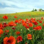 Онлайн викторина: «Лето-красное лето!»