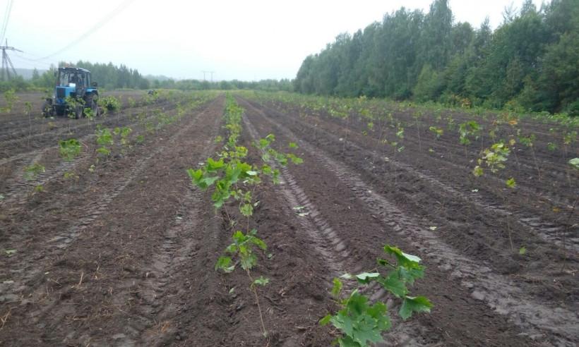 Питомник саженцев для озеленения Московской агломерации планируется создать в Подмосковье