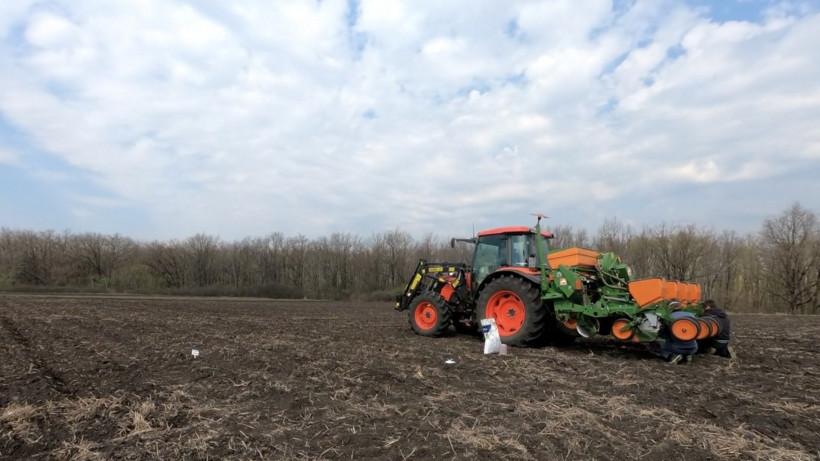 Площадь посевов кукурузы в Подмосковье превысила показатели прошлого года на 25%