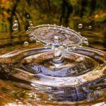 Познавательная беседа олайн «Поможем природе»