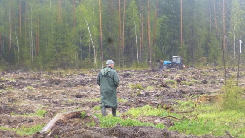 Санитарно-оздоровительные мероприятия продолжаются в подмосковных лесах