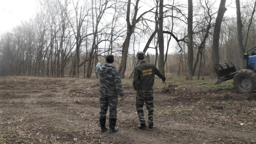 Санитарно-оздоровительные мероприятия ведутся на территории лесного фонда Подмосковья