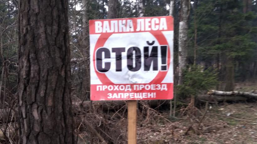 Санитарно-оздоровительных мероприятия продолжают проводить в лесах Подмосковья