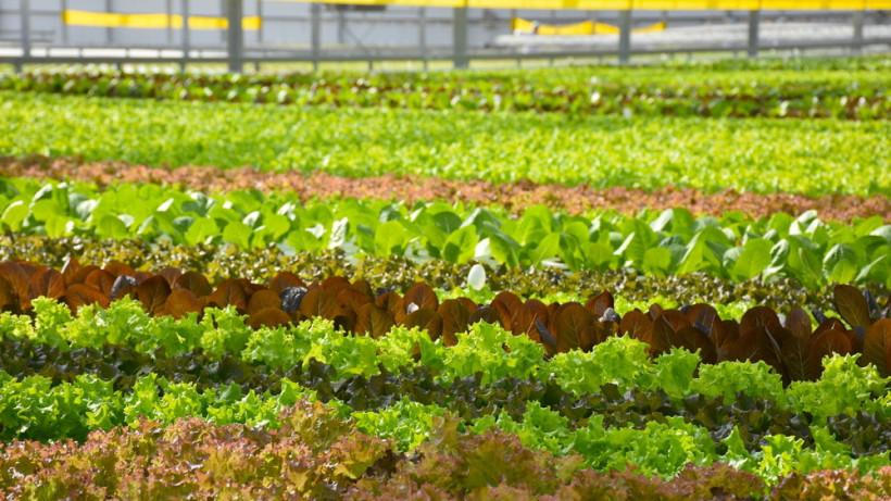 Сев мини-салатов завершился в теплицах сельхозпредприятия в Наро-Фоминском округе