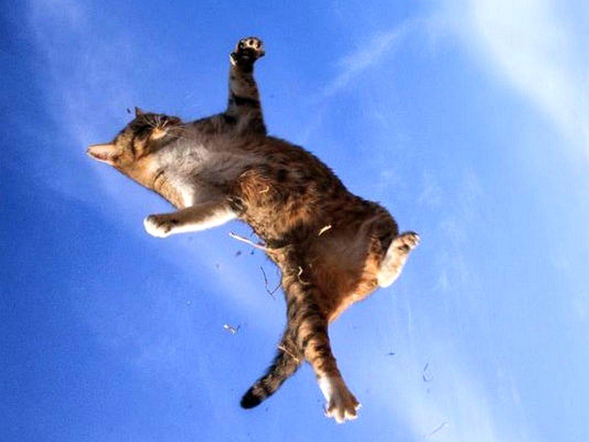 Зоозащитников возмутило видео Аниты Цой с котиком