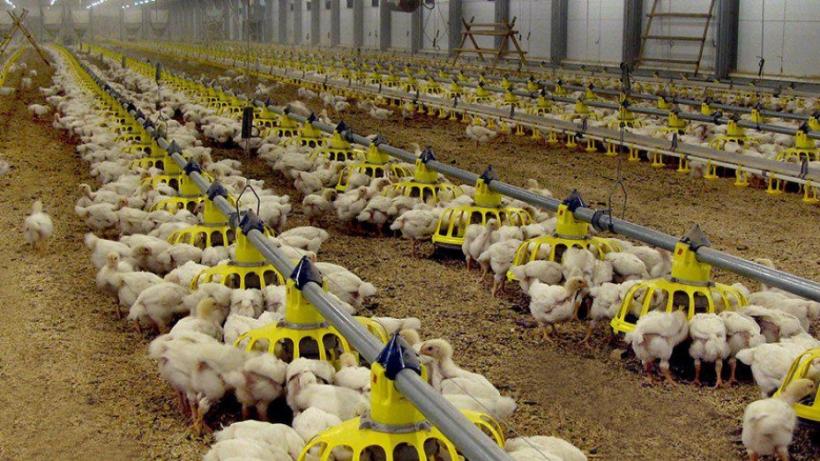 Более 18 тыс. исследований на птичий грипп провели в Подмосковье с начала 2020 года