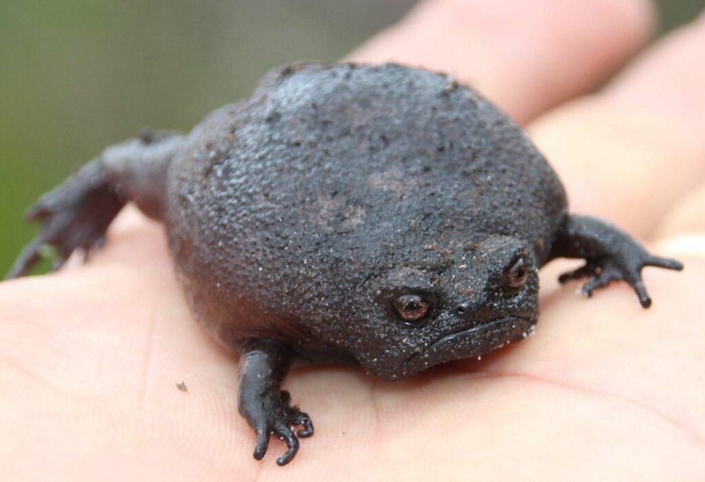 «Грустная» лягушка набирает популярность в Сети