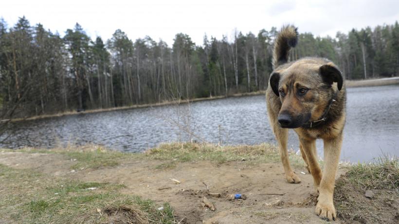 Карантин по бешенству животных отменили на территории Чехова