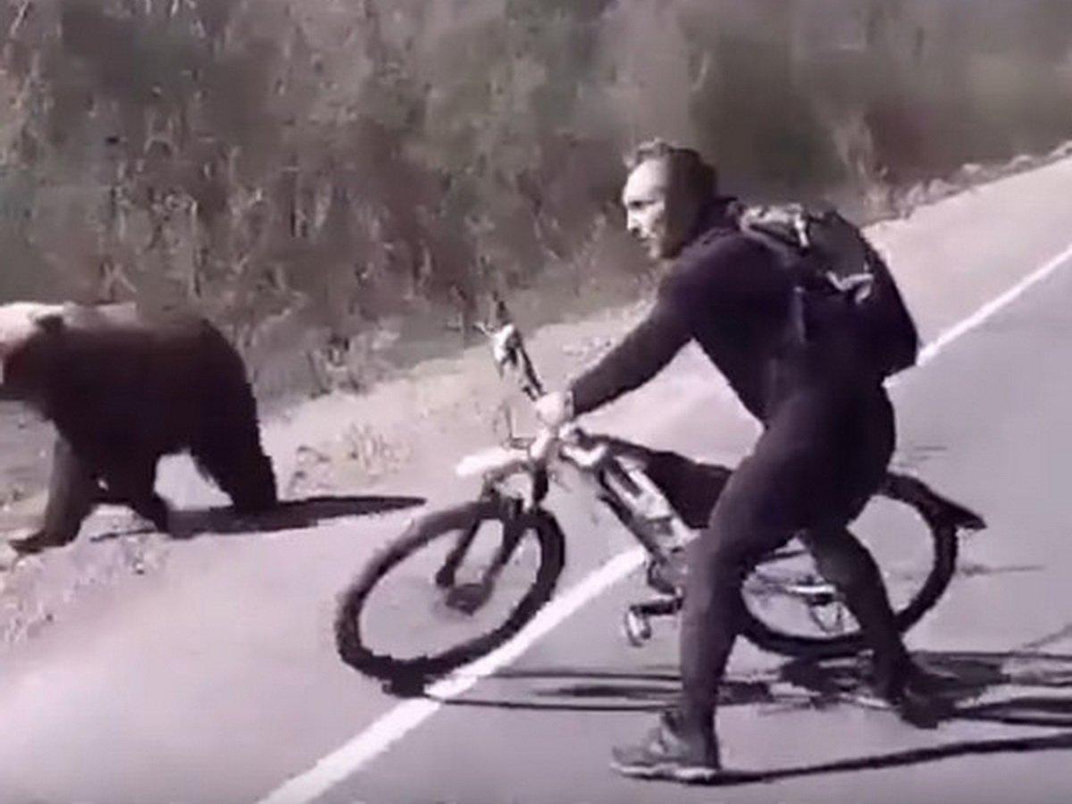 Мужчина отбился велосипедом от медведя