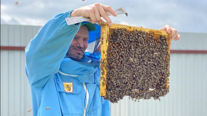 Первый племенной репродуктор по разведению пчел создается в Подмосковье