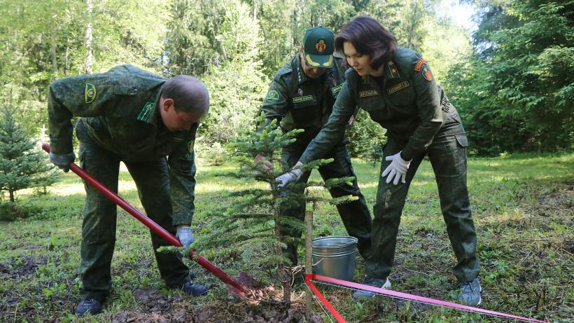 «Сад Памяти» высадили в Бородинском лесничестве