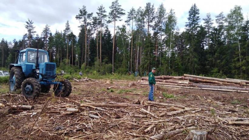 Санитарно-оздоровительные работы продолжаются в подмосковных лесах