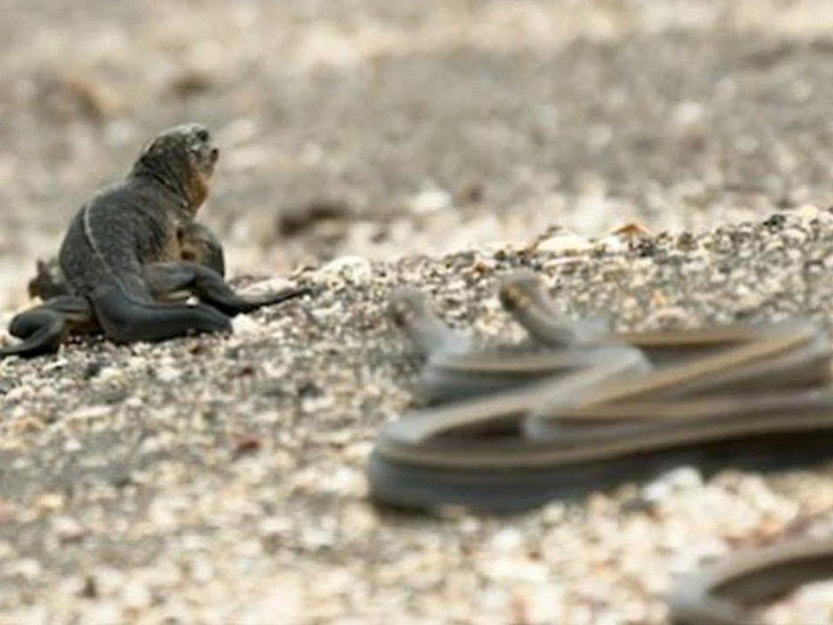 Схватка варана с песчаной змеей закончилась ее победой