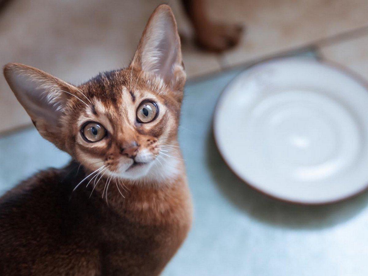 Видео с очень голодным котом стало вирусным в Сети