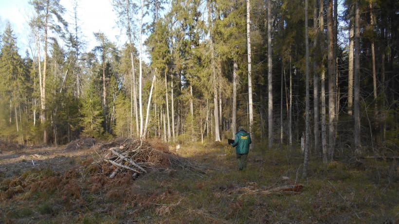 Виновников самозахвата участка земель лесного фонда установили в Мытищах