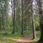 Дистанционная беседа «Береги леса»