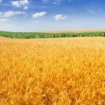 Дистанционная беседа «Уборка на полях»