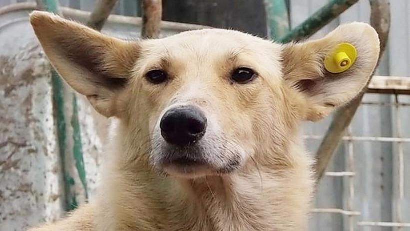 Карантин по бешенству животных ввели в городском округе Подольск