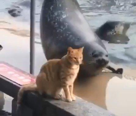 Кот, проигнорировавший выкрутасы тюленя, стал звездой Сети