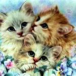 Котики - экзотики