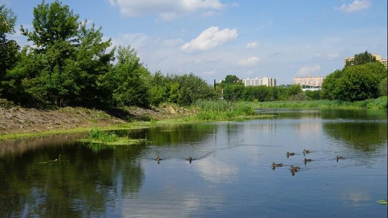 Минэкологии Подмосковья объявило конкурс на создание проекта по расчистке реки в Рошале