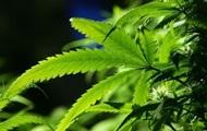 Модифицированная марихуана убивает рак - ученые