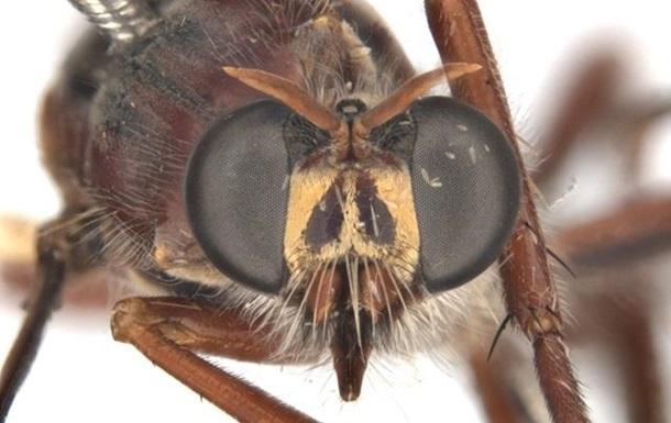 Новые виды мух назвали в честь Дэдпула и Локи