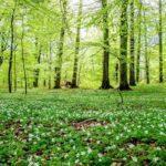 Онлайн-программа «В природе столько красоты!»