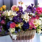 Онлайн-встреча «Яркие цветы природы»