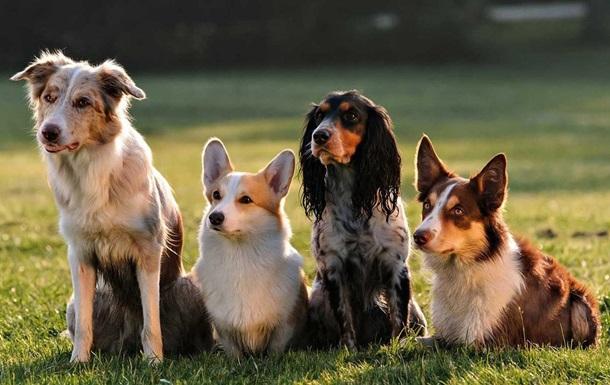 Появился новый метод пересчета возраста собак в человеческие года